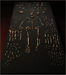 Lee Roger Berger research team, Sept. 10 2015