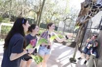 Participants visit the Orlando Zoo.